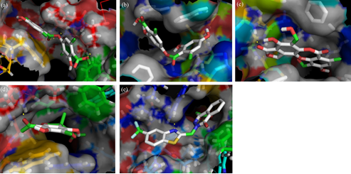 Stereoview of aldose reductase docked with (a) atranorin, (b) lecanoric acid (c) salazinic acid, (d) usnic acid and (e) zopolrestat